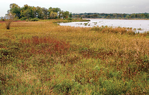 Cherokee Marsh. Photo by Friends of Cherokee Marsh.