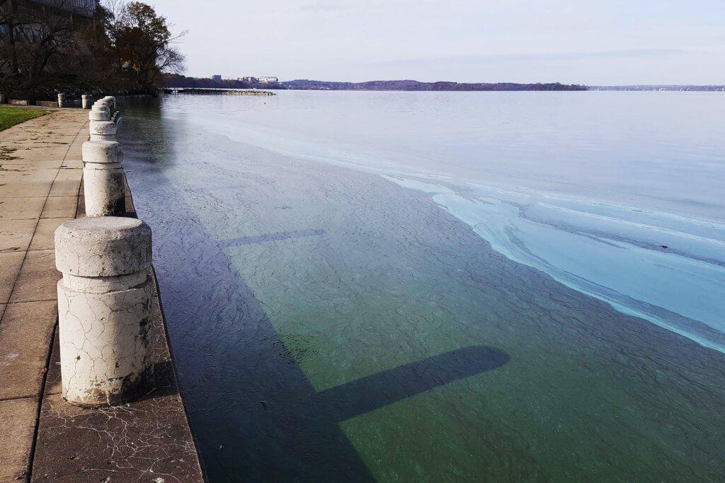 Cyanobacteria Lake Mendota